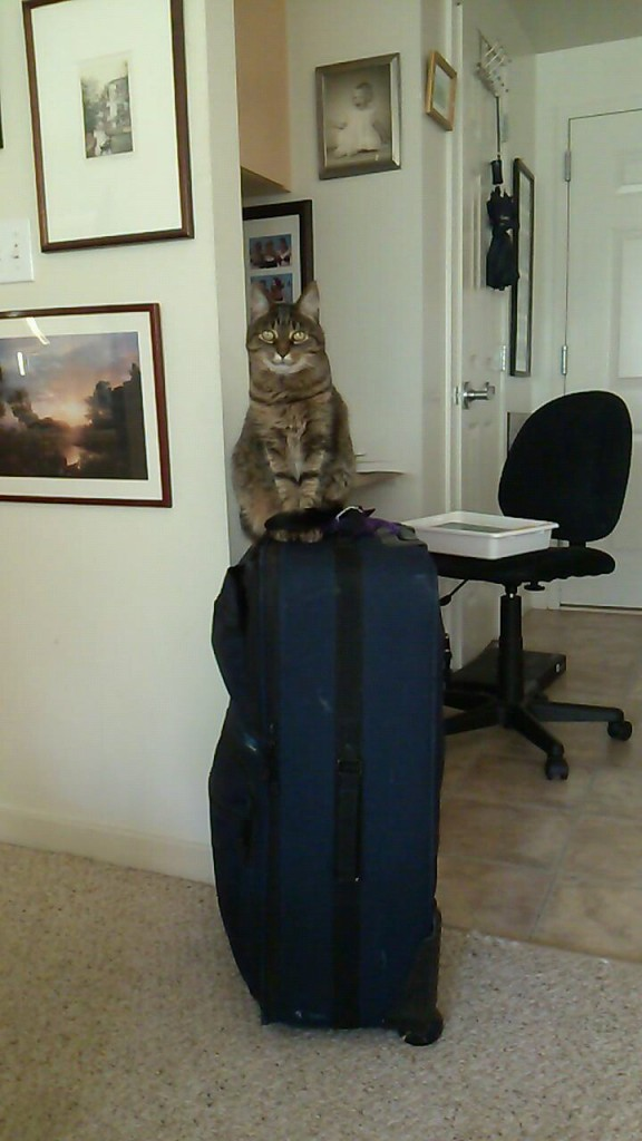 Gigi and suitcase for size, also cats are cute