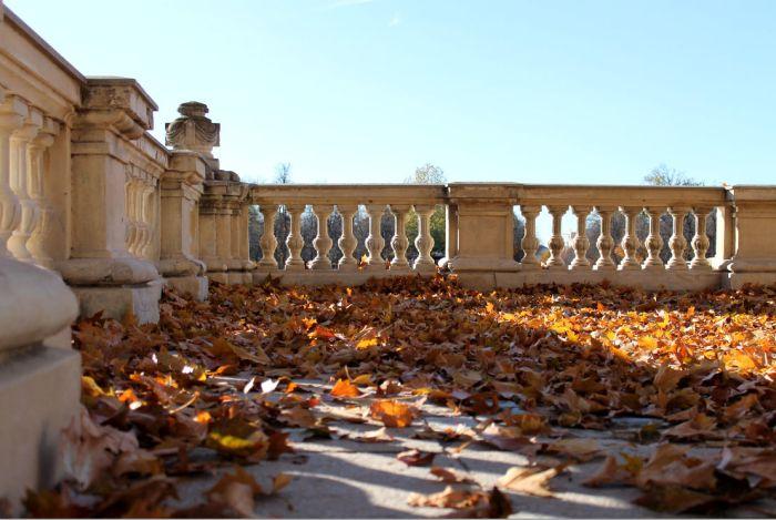 Retiro leaves
