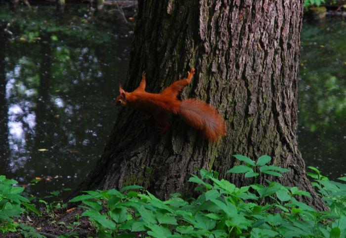 Adorable Polish squirrel